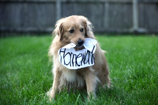 dog-homeworkiStock_000025329425_Large.jpg